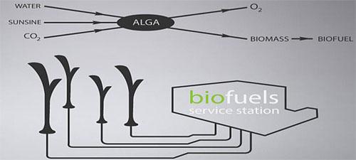 Eco-Technology Biolamp Concept