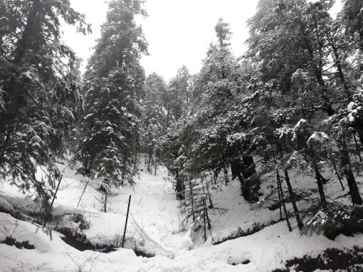 kufri-himachal-snowfall-1